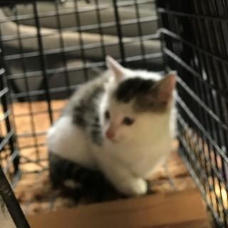冬に生まれた子猫1ヶ月と少しぐらい。