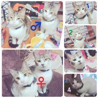 5ヵ月のかわいい猫ちゃん達です