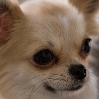 犬服・犬グッズ・ペット用カート専門 買取しています。