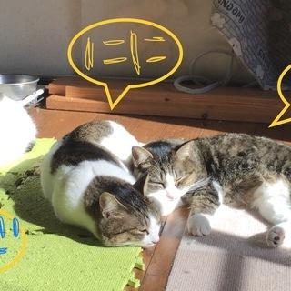 保護猫の4匹、1匹からお譲りします/避妊去勢済/ワクチン済…