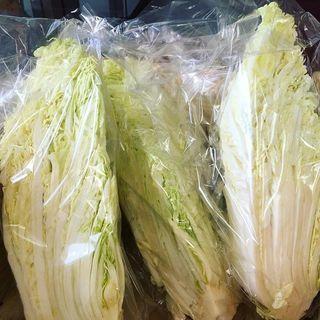 減農薬白菜300円 1/4カット100円!?