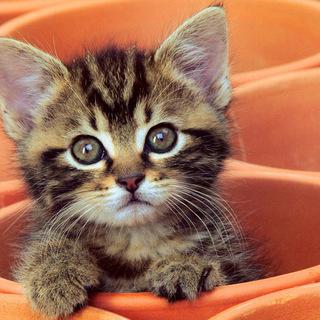 🐈子猫が欲しいです