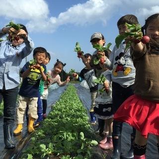 自分で採って、そのまま食べる収穫体験付きBBQ!!【アグリパーク...