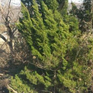 木が大きくなって延び放題