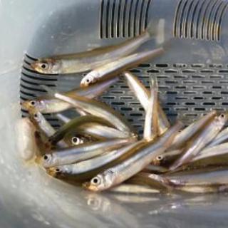 3月 ワカサギ釣り(高滝湖)