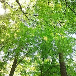 自然とつながり、真の自己をもたらすワークショップ 〜 熟成から解放...