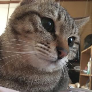 キレイ系の嫉妬深い猫ちゃん