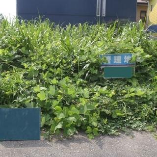空き家 空き地 お庭 草刈り  管理でお困りではありませんか? ...