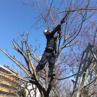 庭の手入れ 伐採 植木屋【所沢市 清瀬市 入間市 飯能市 さいたま...