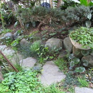 ★3月中旬までにお引き取り必須★庭石、敷石(植栽も宜しければ)差...