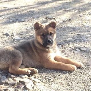 仔犬1匹になりました。高知県安芸市。健康状態良好です。3月2日現在