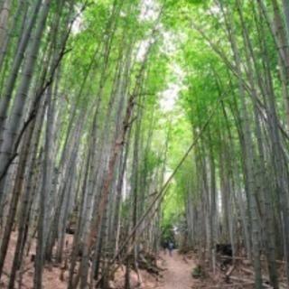 竹林整備、一般家庭の廃品回収。