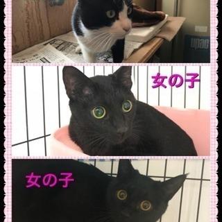 ハチワレ・黒猫の兄妹です