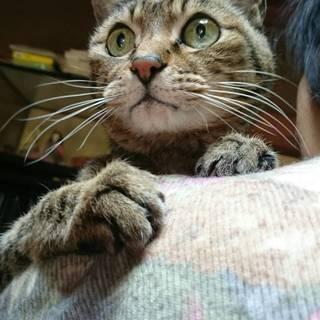 飼い主死去により行き場のなくなってしまう猫ちゃんの里親様緊…