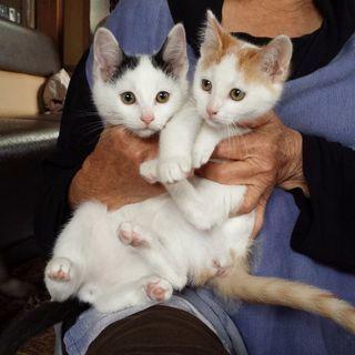 3月4日(日)子猫の譲渡会 ❤️黒白男の子と茶白の女の子 …