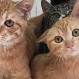 山口県で保護された猫達です【里親募集】