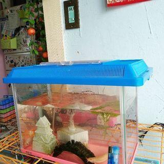 金魚どじょうコリドラス水槽一式まとめて