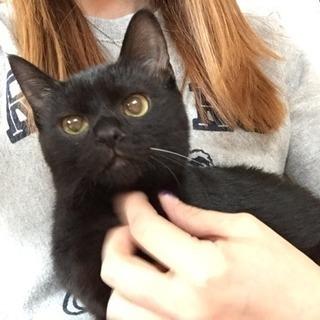 黒猫7カ月♀