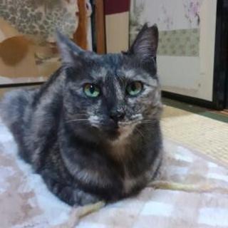 落ち着いていて温厚なサビ猫ちゃん😼