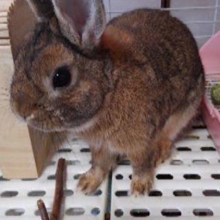 ウサギの男の子1歳