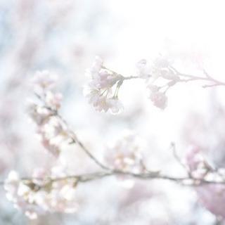平日休み、京都住みの為の写真サークル