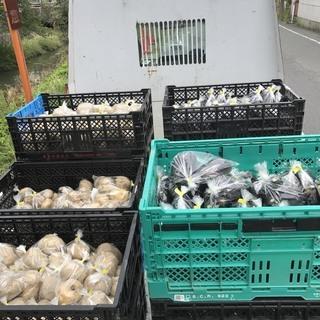 募集再開 種・苗の植え付け作業