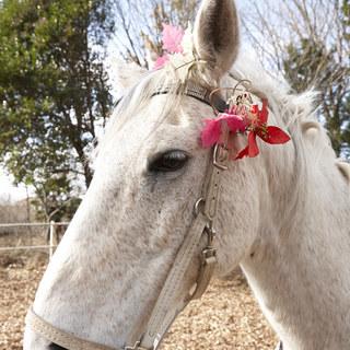 馬と遊ぶ 馬の講座 無料説明会