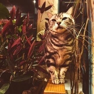 猫ちゃんたちと過ごすポップなタイ料理食堂 − 山梨県