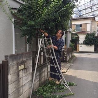 庭の手入れ 高木伐採ならツチヤガーデンホームへ 埼玉県所沢市新座市...