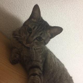 約1年半ほどの猫 メス 避妊手術済