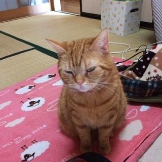 茶トラのネコちゃん