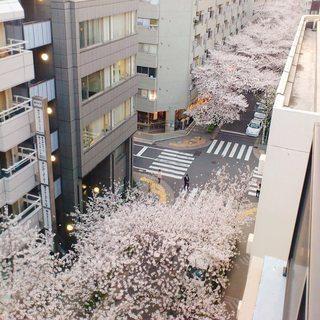 🌸目黒川添いの桜並木に面する屋上テラス席から花見♪桜が見下ろせます♪