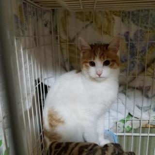 冬の寒さに震えてた保護猫 1歳未満