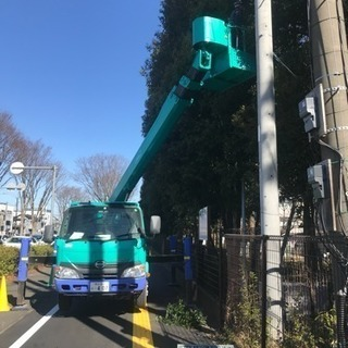 高木剪定 伐採致します。埼玉県所沢市 入間市 飯能市 清瀬市〜