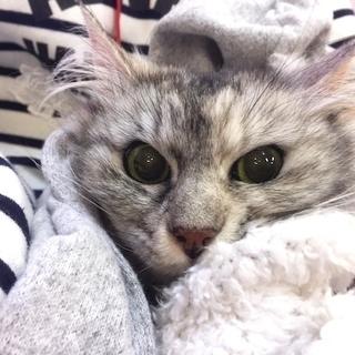 4月14日(土) 猫の譲渡会 名古屋市港区 競馬場会館 みなと猫の会主催