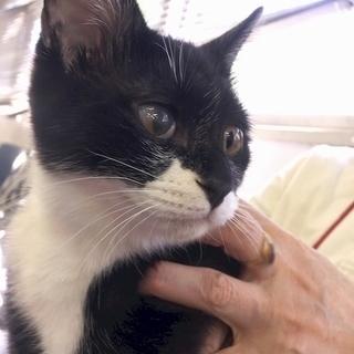 4月22日(日) 猫の譲渡会 名古屋市守山区 もりやま犬と猫の病院...