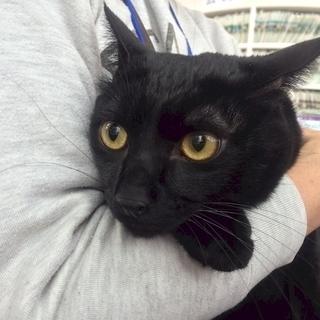 4月29日(日祝) 猫の譲渡会 名古屋市港区 社会福祉法人 中部盲...