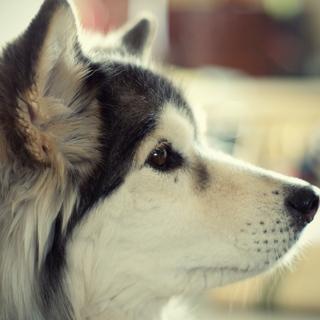 ご自宅で犬を飼われている方へのインタビューにご協力お願いします