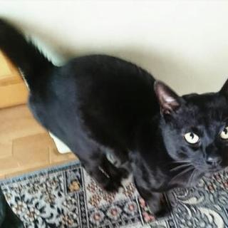 黒猫の男の子の里親募集中です。