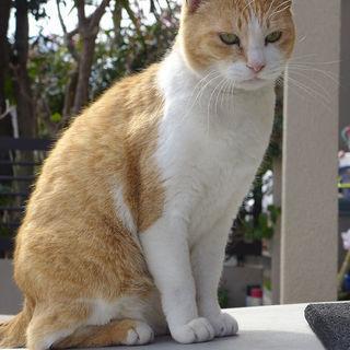 飼い主が急逝。遺族に屋外に出されてしまった可哀想な2匹の猫ちゃん...