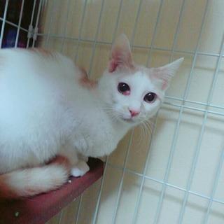 白茶の猫ちゃんです。