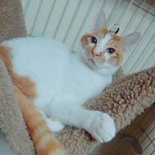ハンサムな猫ちゃんです。