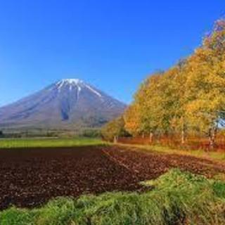 【売りたい土地】雑種地 1505㎡ ≪北海道 ニセコ≫