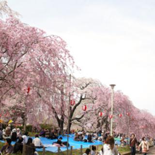 4/15(日)榴岡公園でお花見交流会☆