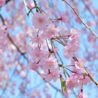 春ツーメンバー募集
