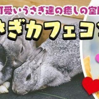 うさぎカフェコン ☆★愛知★栄★3月31日(土)18時30分スタート★