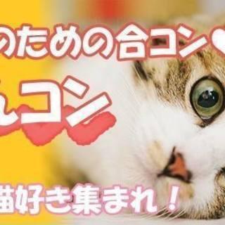 にゃんコン ☆★愛知★3月20日(火)18時30分【少人数制】