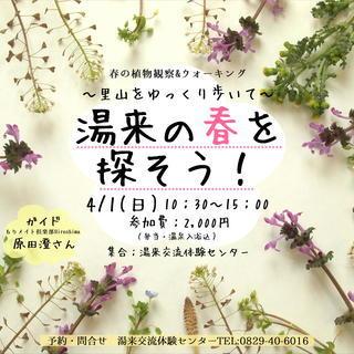 湯来町春の植物観察&ウォーキングイベント【温泉入浴券付き】【湯来交...