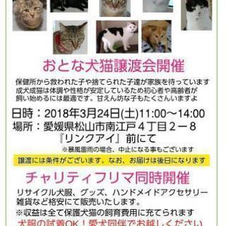 おとな犬猫譲渡会&チャリティフリマ開催