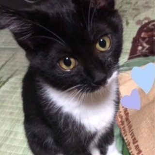 ネコ好きな里親さん探してます。